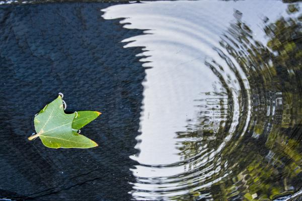 Leaf calmly floating in the water among the ripples.